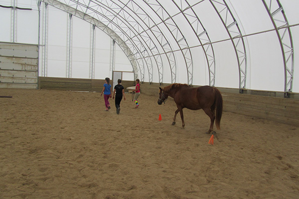 Equine Assisted Learning Program For At-Risk Youth
