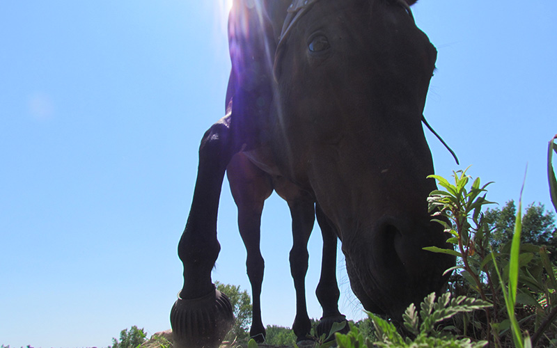 Close up of horse's face - horse riding lessons at DreamCatcher Farms